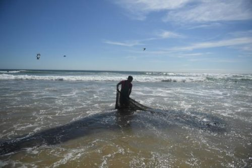 EU-Kommission und Europäische Umweltagentur: Europa muss Meere und Ozeane besser schützen