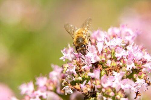 """Ein virtueller Blick in eine Welt ohne Bienen: Kommission startet den """"Pollinator Park"""""""