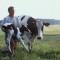 EU-Investitionsoffensive: Künftig günstigere Darlehen für Landwirte
